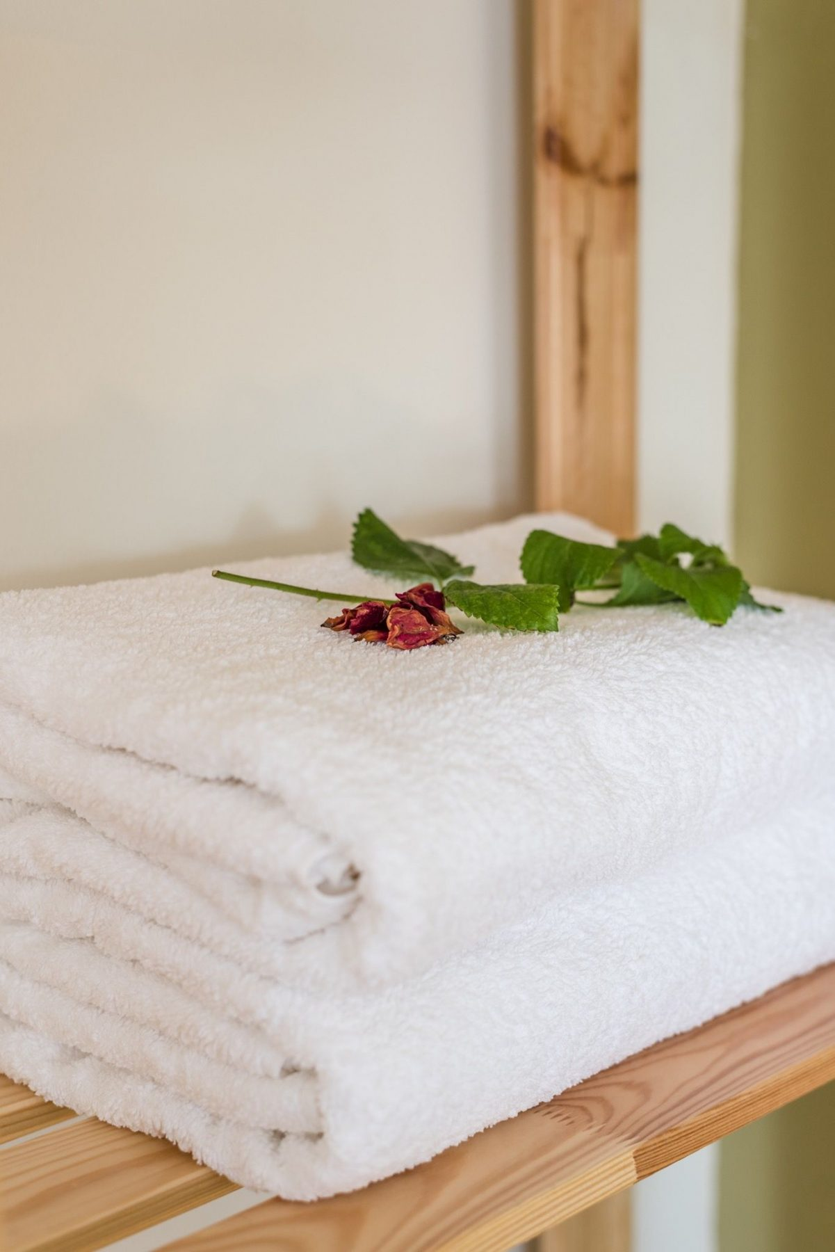 towel flower